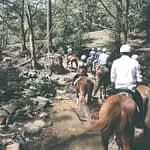 Team building horse riding sydney utb example