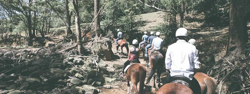 Team Building Horse Riding